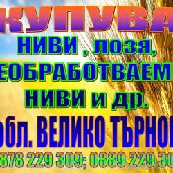 kupuva VT NIVI neobrabotv